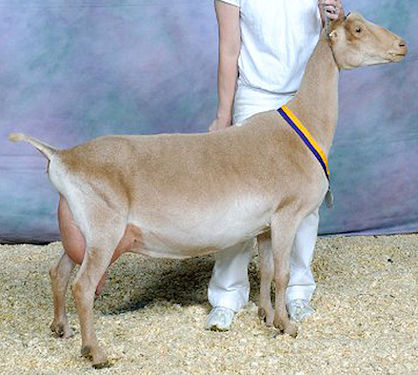 avena 3yr nationals 12 375h