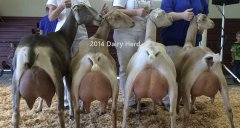 2014_dairy-herd-2_555h_caption.jpg